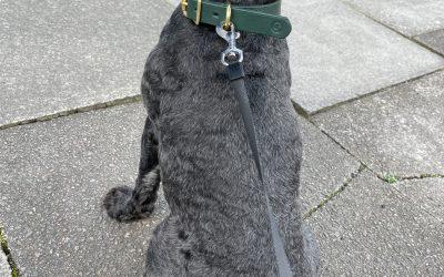 This lucky pup got a bespoke collar at MHC Spring Fair