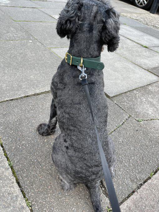 happy pup modelling bespoke dog collar